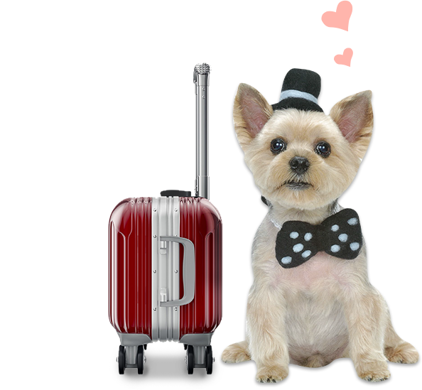 dog-luggage